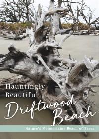 Hauntingly Beautiful Driftwood Beach